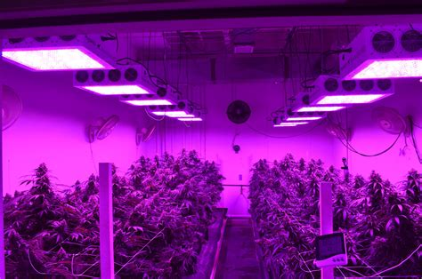 black dog grow lights commercial led lights best grow lights black dog led