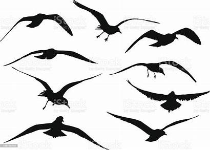 Seagull Vector Silhouettes Silhouette Seagulls Flying Illustration