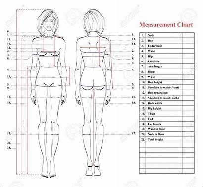 Measurement Chart Sewing Woman Template Measurements Patterns