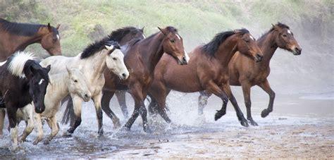 horses running birthday glenworth valley don