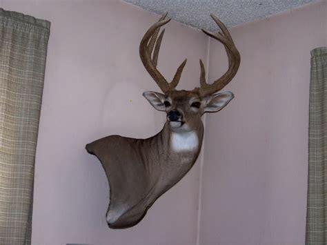 Pictures Of Deer Mounts