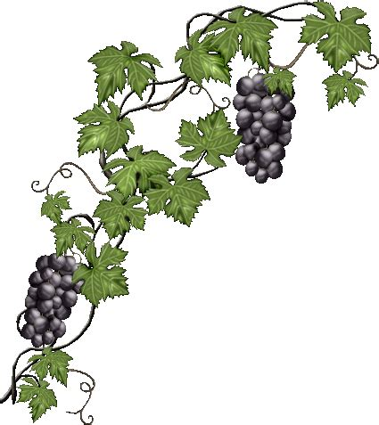 la cuisine des anges image vigne raisin pour la creation numerique
