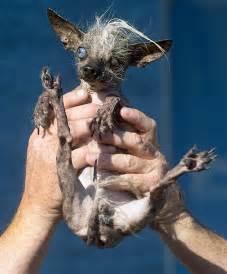 quasi modo the mutt is crowned world s ugliest dog nbc news