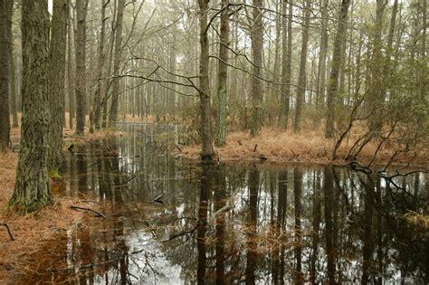 wetland trees free photo sw forest trees pine wetland free image on pixabay 851827
