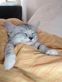 可爱搞笑猫咪图片图片大全 可爱搞笑小猫猫