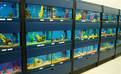 how to store fish true value pet store in reedsburg wi has the best selection of pets pet supplies