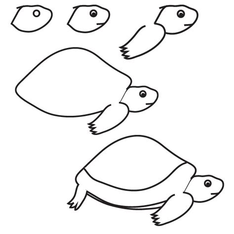drawing turtle