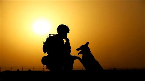 tv special   military dog teams  glory
