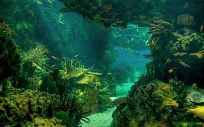 Underwater Ocean Scene Scenes Water Desktop Marine