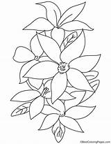 Lily Flowers Coloring Pages Bestcoloringpages Flower Sheets Christmas sketch template
