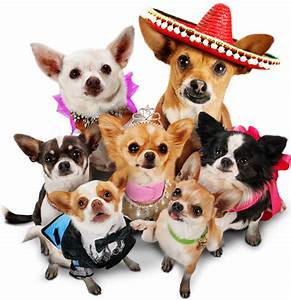 Pin Beverly Hills Chihuahua 2 Puppies 1680x1050 on Pinterest