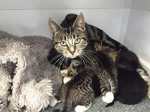Mamma gatta coraggiosa scappa di casa per ritrovare i suoi gattini abbandonati