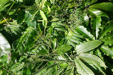 what gives plants their green color what gives plants their green color health benefits of