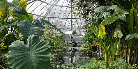 Botanischer Garten Naples by Botanical Garden Of Basel