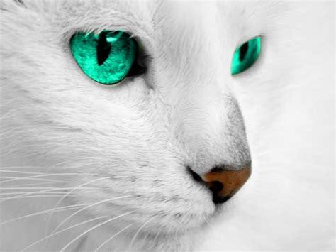 warrior cats wie gut kennst du weissflug
