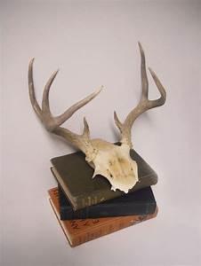 Vintage point deer antler skull wall decor