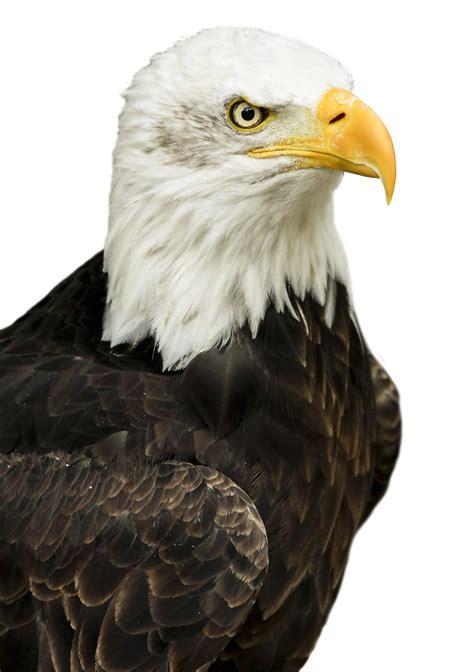 eagle png image purepng  transparent cc png image