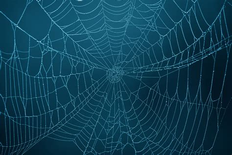 Free Cleveland Cavaliers Wallpaper Spider Web Photos Weneedfun