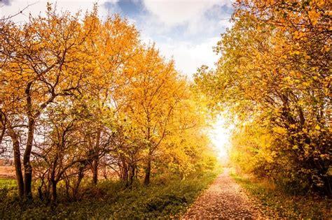 beautiful autumn landscape  warm colors  light