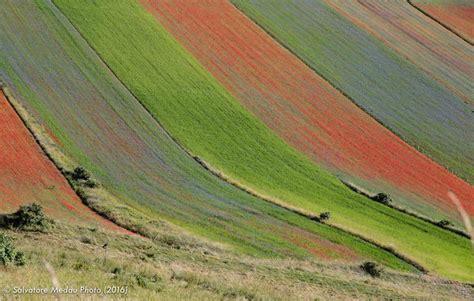 tappeto fiorito tappeto fiorito juzaphoto