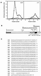 Disruption Of The P70s6k  P85s6k Gene Reveals A Small Mouse Phenotype And A New Functional S6