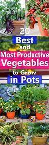 Walnussbaum Selber Pflanzen : 10 veggies you can grow again pflanzen g rten und balkon ~ Michelbontemps.com Haus und Dekorationen
