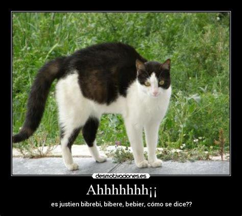 Gato Meme - gato asustado meme ma