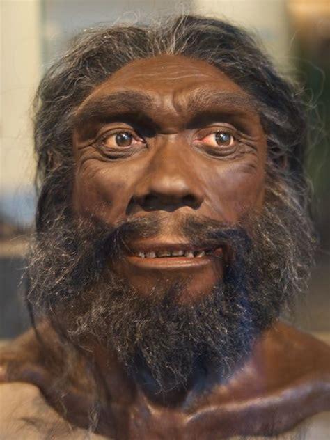 25 best ideas about sapiens evolution on tableau synoptique d 233 criture trace