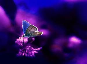Neon blue Butterflies & Animals Background Wallpapers on