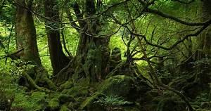 Rainforests: Collaborative Intelligence Ecosystems « Zann Gill