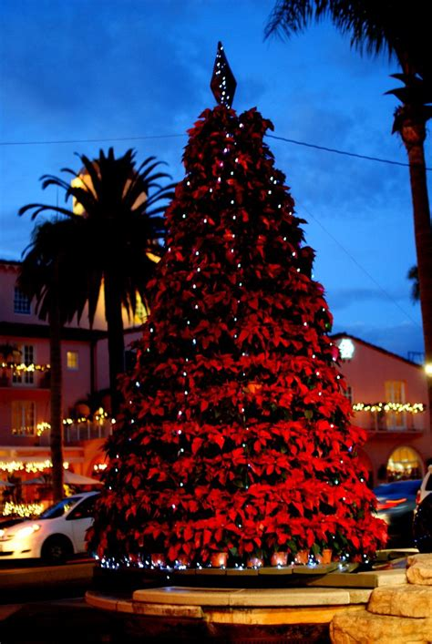 california christmas tree christmas decorating foods