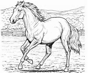 horse coloring page coloring book - Coloring Pages Horses Realistic