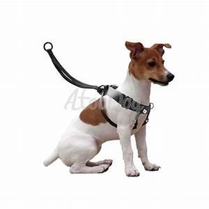 Harnais Gros Chien : collier pour gros chien qui tire ~ Nature-et-papiers.com Idées de Décoration