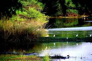 SULTANPUR BIRD SANCTUARY Photos, Images and Wallpapers ...