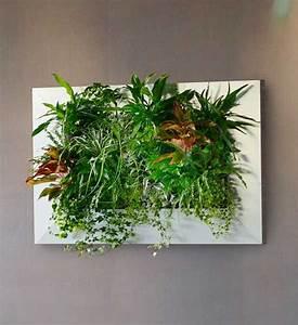 Pflanzen An Der Wand : livepicture pflanzenbild im greenbop online shop kaufen ~ Articles-book.com Haus und Dekorationen