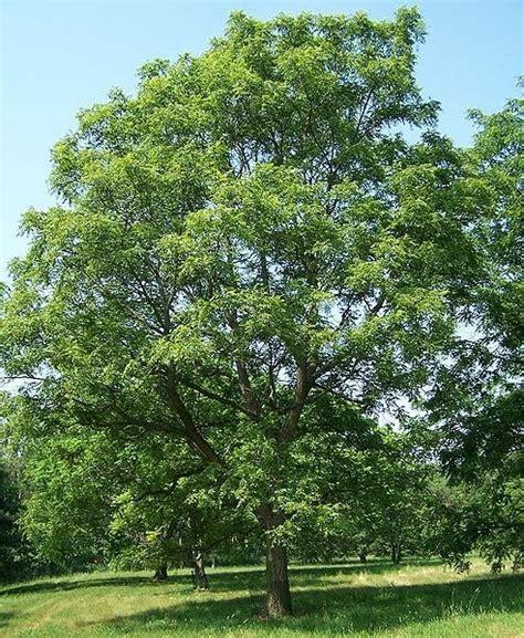 walnut tree pam s midwest kitchen korner grandma s nut bread