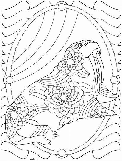Coloring Pages Adult Dover Sea Walrus Haven
