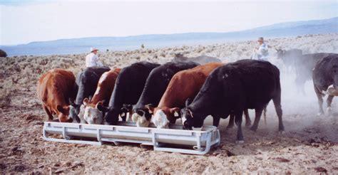 feed cows    calves beef magazine