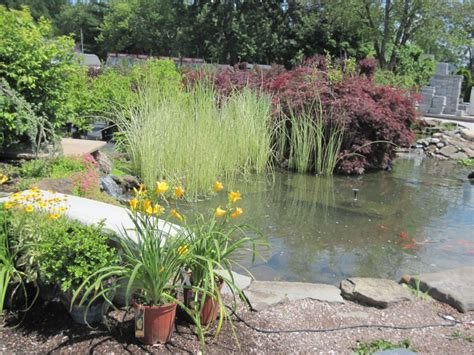 water gardening harkens landscape supply garden
