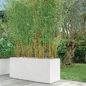 Bambou En Pot Pour Terrasse : bambou moyen phyllostachys aureosulcata 39 aureocaulis 39 plantes et jardins ~ Louise-bijoux.com Idées de Décoration