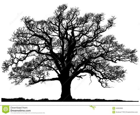 oak tree clipart black and white silhouette of oak tree stock illustration illustration of
