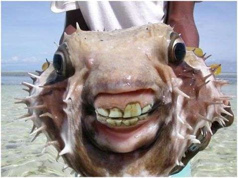 Best Ideas About Weird Sea Creatures Pinterest