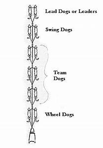 sled dog positions | Iditarod from Outside