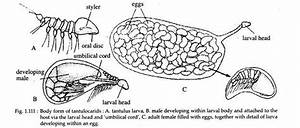 Phylum Arthropoda  Features And Classification  With Diagram