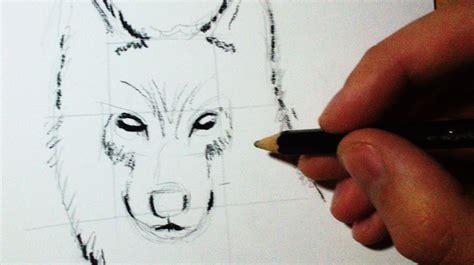 comment dessiner un loup croquis profil tuto