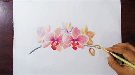 Drawing Orchids Colored Pencils Youtube
