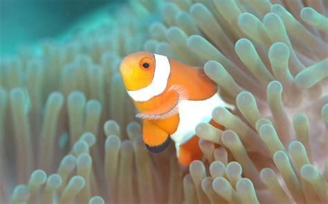 aquarium poisson de fond fonds d 233 cran aquarium poissons gratuits