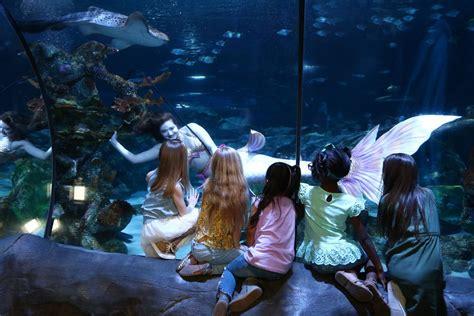 mermaids diving    sea life orlando aquarium