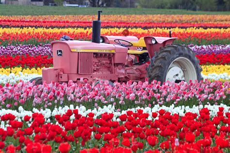 tulips bed farm hd tulip fields tulips field flower flowers tractor wallpaper 4752x3168 428128 wallpaperup