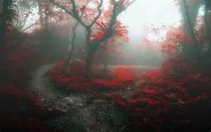Nature, Landscape, Forest, Mist, Path, Trees, Daylight